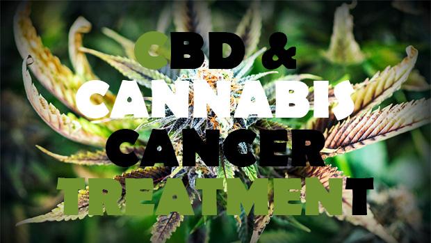 CBD and Cancer Treatment